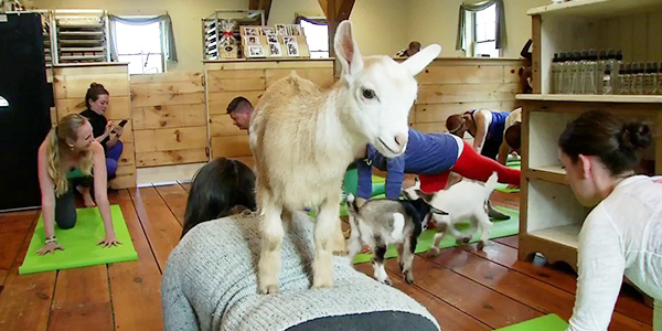 Goats. Yoga. And Fall Prevention for Youth Workers.